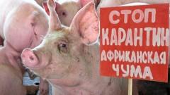 В Иркутской области из-за вспышки  АЧС в поселке Куда объявлен режим ЧС