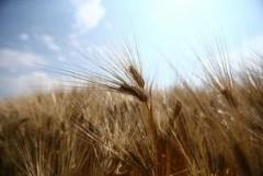 Кубань направит 250 млн рублей на развитие социальной и инженерной инфраструктуры сельской местности