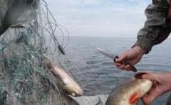 Донские полицейские изъяли у браконьеров рыбу