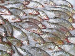 На Дону 460 кг потенциально опасной рыбы продавцу пришлось утилизировать