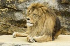 Под Саратовом на 15-летнего школьника напал лев