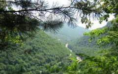 Глава Рослесхоза дал положительную оценку работе по сохранению лесных богатств Адыгеи