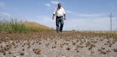 На Калмыкию обрушились полчища саранчи