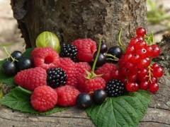 В Курганинском районе площади садов и ягодников увеличены до 111 га