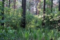 В горах Большого Сочи спасатели ищут пропавшего в лесу грибника