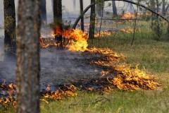 На Дону установилирежим ограничения пребывания граждан в лесах