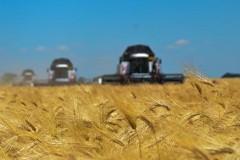 На Дону стартовала жатва-2017