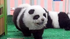 В Сочи туристам предлагали сделать фото с пандой, которая оказалась щенком