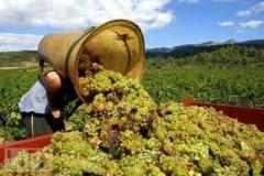 Андрей Коробка: Краснодарский край – лидер в виноделии
