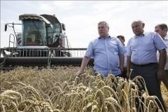 На Дону валовой сбор ранних зерновых достиг 8 млн тонн