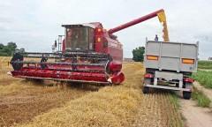 На Кубани убрано 75% зерновых и бобовых культур