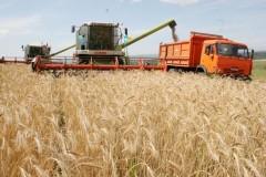 На Дону завершается уборка ранних зерновых