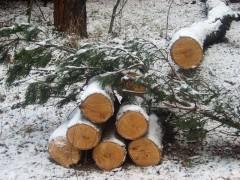 В Иркутской области рабочие вырубили 137 сосен на 891 тысячу рублей