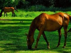 В Новосибирской области пасущаяся на поляне лошадь убила ребенка