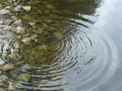 В Рязанской области в реке обнаружен