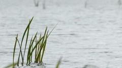 В Волгоградской области брат с сестрой утонули в реке во время сбора ракушек