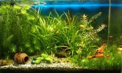 Житель Кубани украл из павильона по продаже кваса оборудование, необходимое ему для аквариума