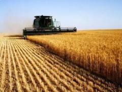 Аграрии Кубани смогут получить субсидии при закладке сада площадью от трех гектаров
