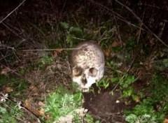 В Нефтекумском районе Ставрополья обнаружены костные останки человека