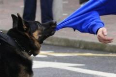 В Копейске собаки искусали лицо 9-летнему мальчику, проводится проверка