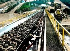 Сахарные заводы Кубани переработали 10 млн тонн сахарной свеклы