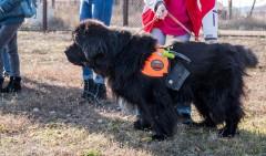 Выставка собак собрала сотни людей со всего Ставрополья