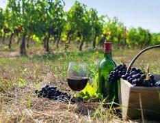 На Кубани запустят 80 новых винных маршрутов