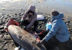 В США от 20-градусного мороза стали умирать акулы