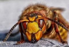 Смертельная схватка шершня и паука попала в Сеть