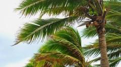 В Сочи прогнозируют усиление ветра