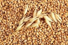 Египет закупил еще 355 тысяч тонн российской пшеницы