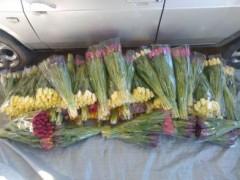 В Белореченском районе раскрыта кража тюльпанов на 70 тысяч рублей