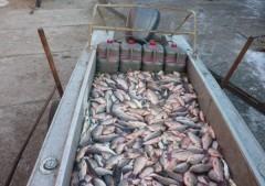 На Кубани пограничники задержали браконьера с незаконным уловом на 50 тысяч рублей