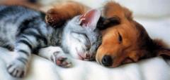 Опрос: 35% россиян больше любят собак, чем кошек