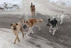 Донские власти поддержали инициативу «Собачьего патруля»
