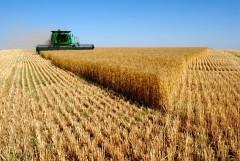 Уборку зерновых на Кубани проведут за две недели