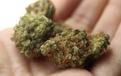 В Северной Осетии пресекли три факта незаконного оборота марихуаны