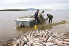 Донские ветинспекторы задержали свыше 26 тонн рыбы и раков