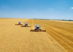 Несмотря на засуху, сельхозпредприятия Краснодара сохранили самую высокую урожайность пшеницы