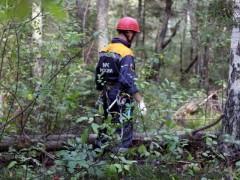 В Сочи пока не нашли пропавшего в лесу 13-летнего мальчика, возбуждено уголовное дело