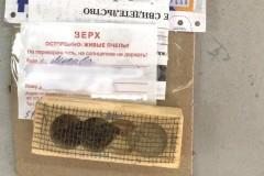 Почта России доставила москвичу «живые» посылки с пчёлами