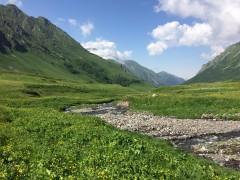 МЧС: В горах Сочи пропал мужчина