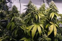 В КЧР на троих мужчин завели уголовные дела по фактам незаконного оборота наркотиков