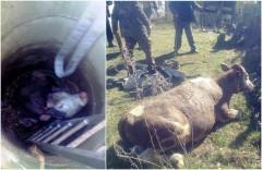 Новошахтинские спасатели извлекли корову из колодца