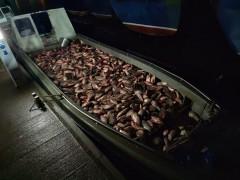 Донские пограничники задержали пятерых браконьеров с незаконным уловом рыбы более 3,5 тонн