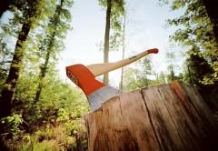 Близ поселка Красная Поляна трое россиян поймались на вырубке леса