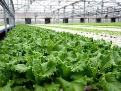 Для фермеров Кубани с этого года запускается региональная программа «Малый сад»