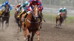 В 2019 году на проведение испытаний племенных лошадей в Краснодарском крае направят 50 млн рублей