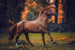 В Минводах задержан подозреваемый в краже лошади