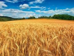 Инвестиции, которые позволяют делать сельское хозяйство Кубани высокорентабельным